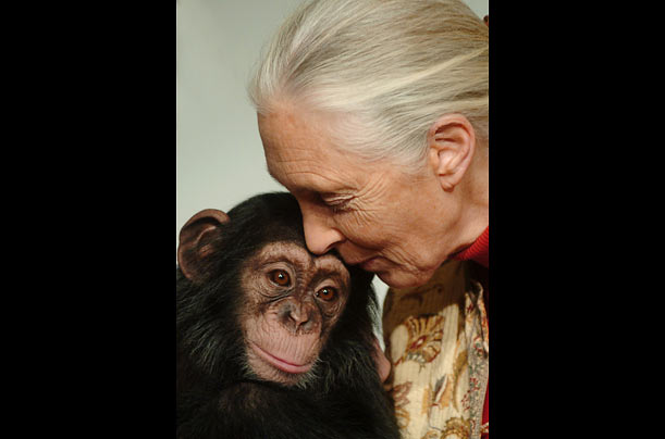 a plea for the chimpanzees jane goodall essay Free jane goodall papers, essays, and research papers today, the institute is a global leader in the effort to protect chimpanzees and their habitats.