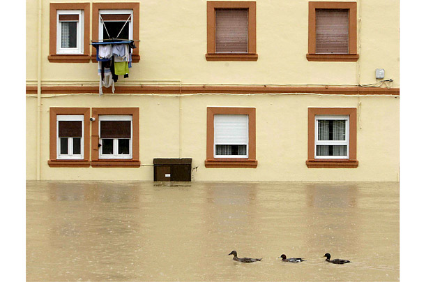 Three ducks swim in a flooded street in Getxo, Biscay, northern Spain, after the banks of the Gobelas river burst.