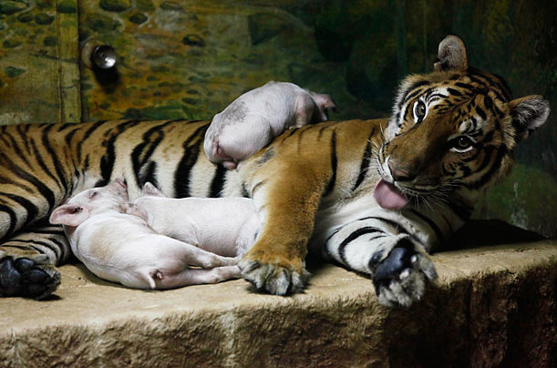 It's All Love