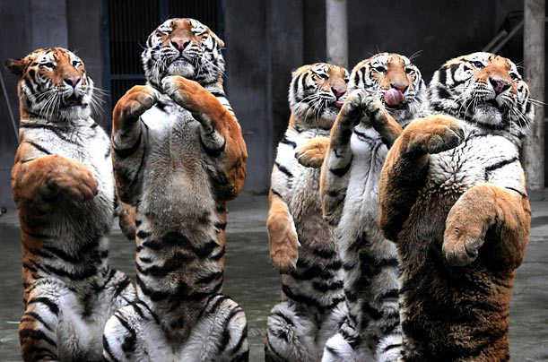 Coochy-Coo