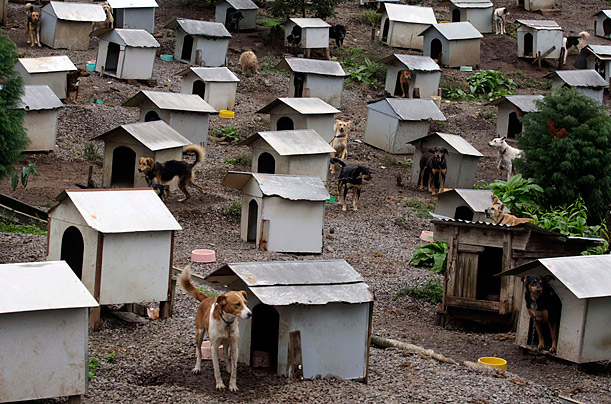 Rescued pups wander around their houses at the Friend of Animals Society dog shelter in Caxias do Sul, Brazil.